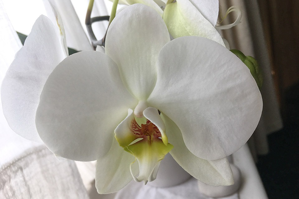 Close up of orchid at Toucan Wholefoods True Nature Clinic